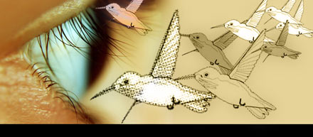 eyebirds