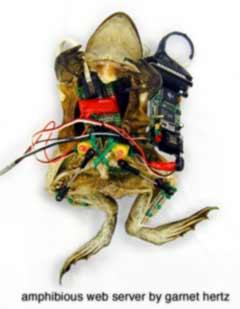 hertz frog web server