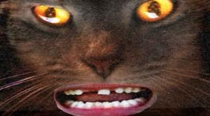 attack-cat